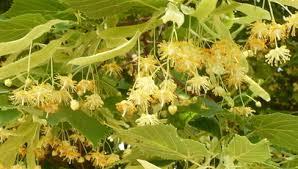 Русенската екоинспекция установи нарушения на билкоз� ...