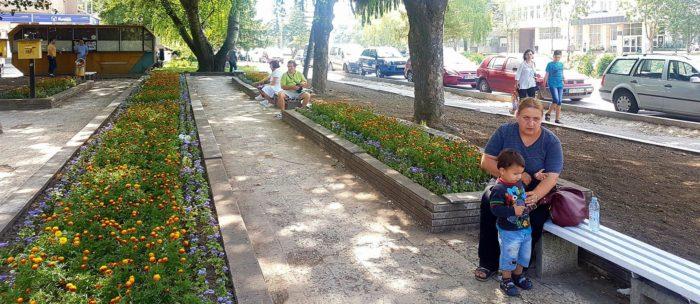 С 4000 цветя облагородиха градинките пред Български пощ� ...