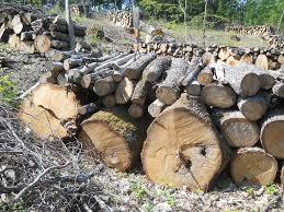 "Служители на ""Кубратска гора"" се натъкнаха на незако� ..."