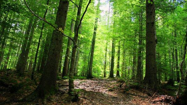 Седмица на гората в община Разград