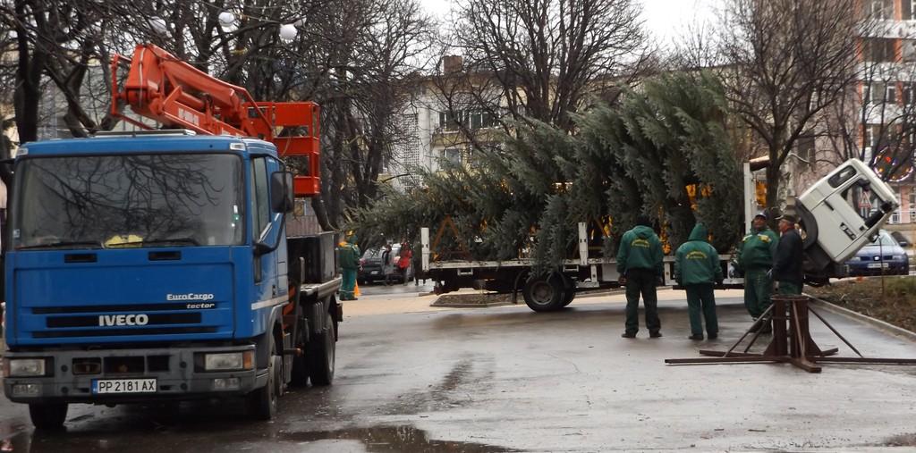 10 метрова Коледна елха пристигна в центъра на Разград