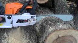 128 кубика дървесина са били обект на посегателство в дъ ...