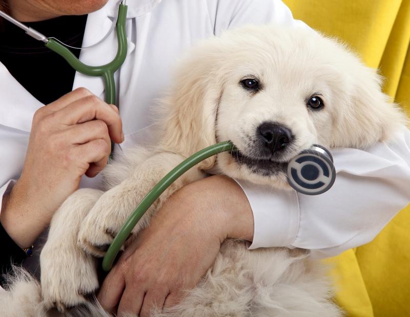 Днес празнуват ветеринарните специалисти