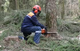 Дървосекач пострада тежко в горски масив край Дрянове� ...