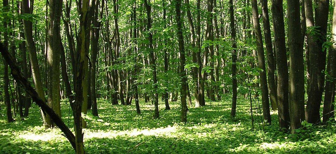 Зачестяват посегателствата върху общинските гори