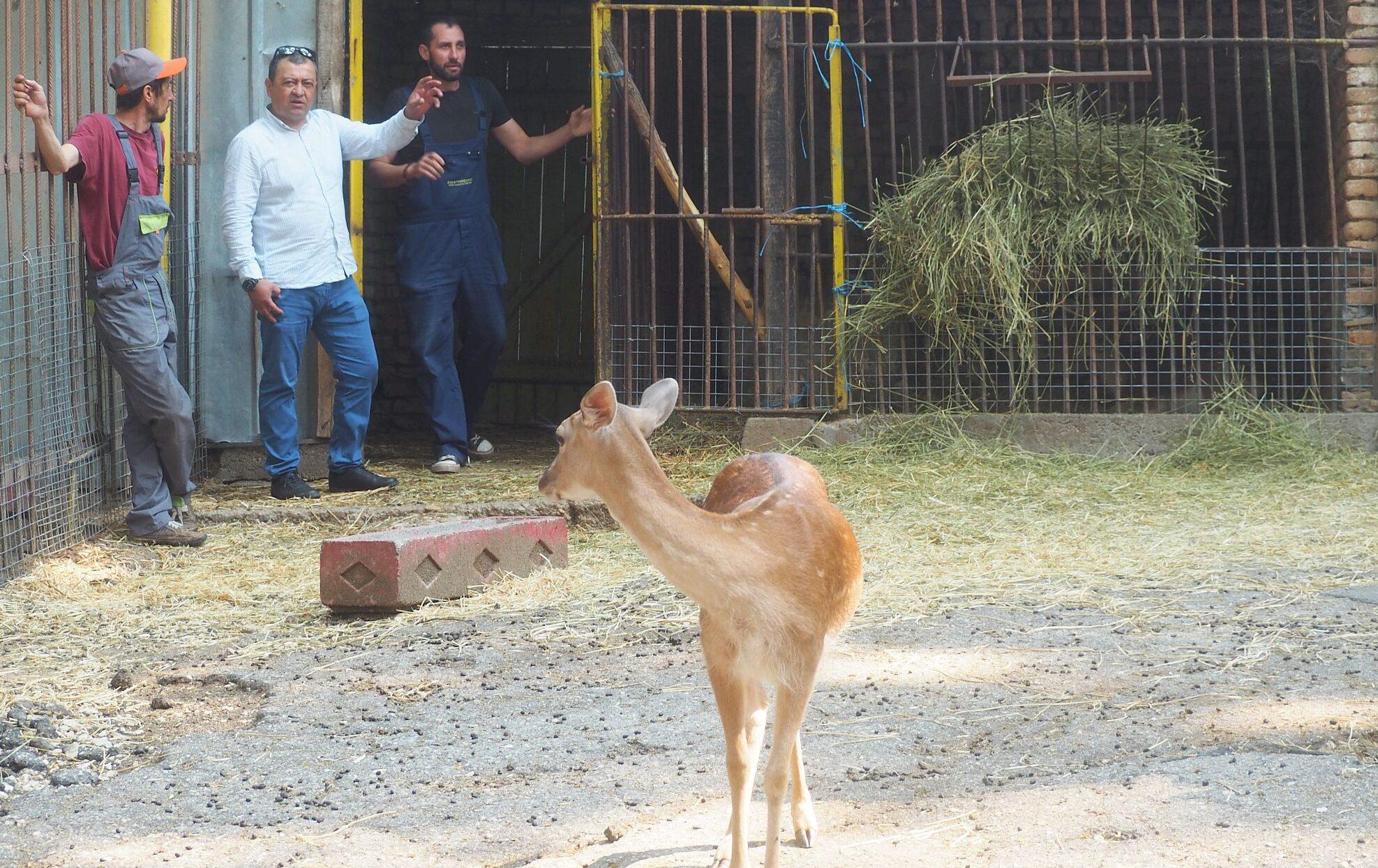 Две лопатарчета се родиха в разградския зоопарк