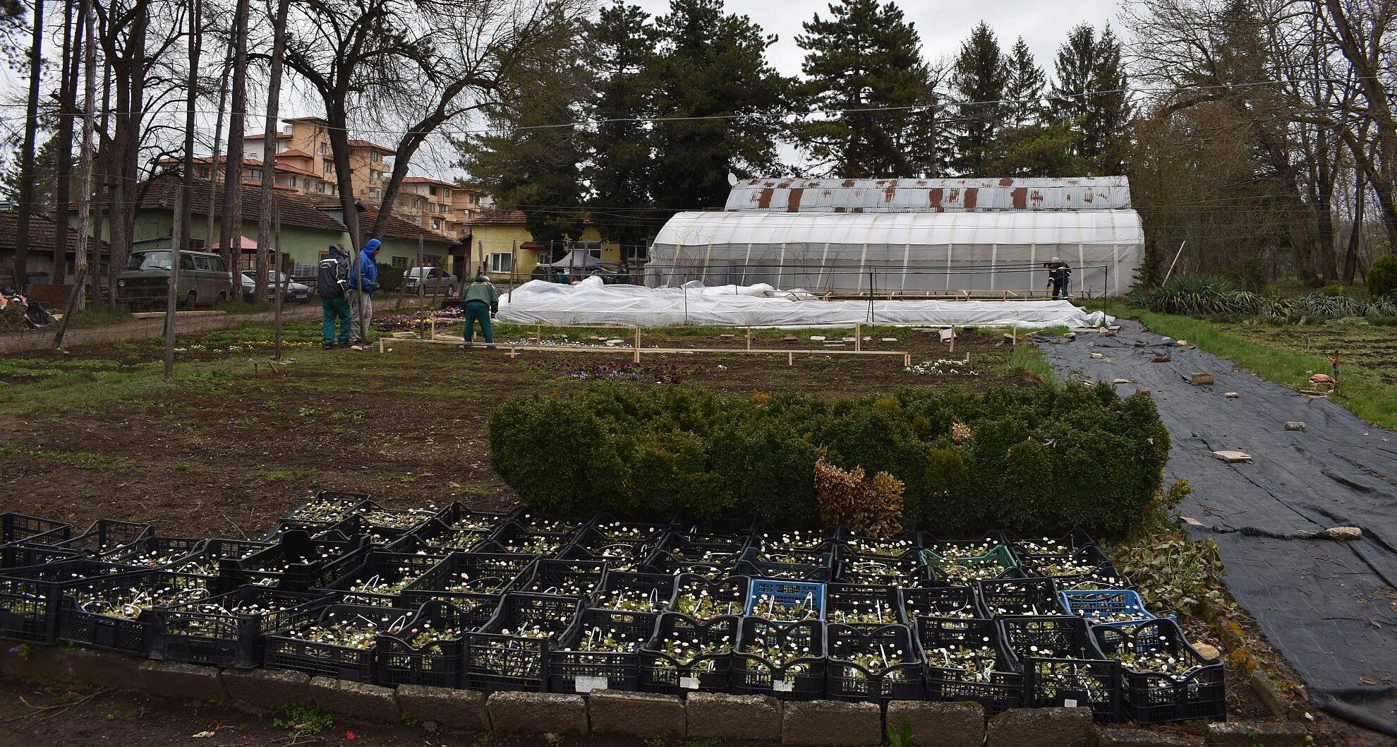 Близо 60 000 растения разцъфват в Разград през пролетно-л ...