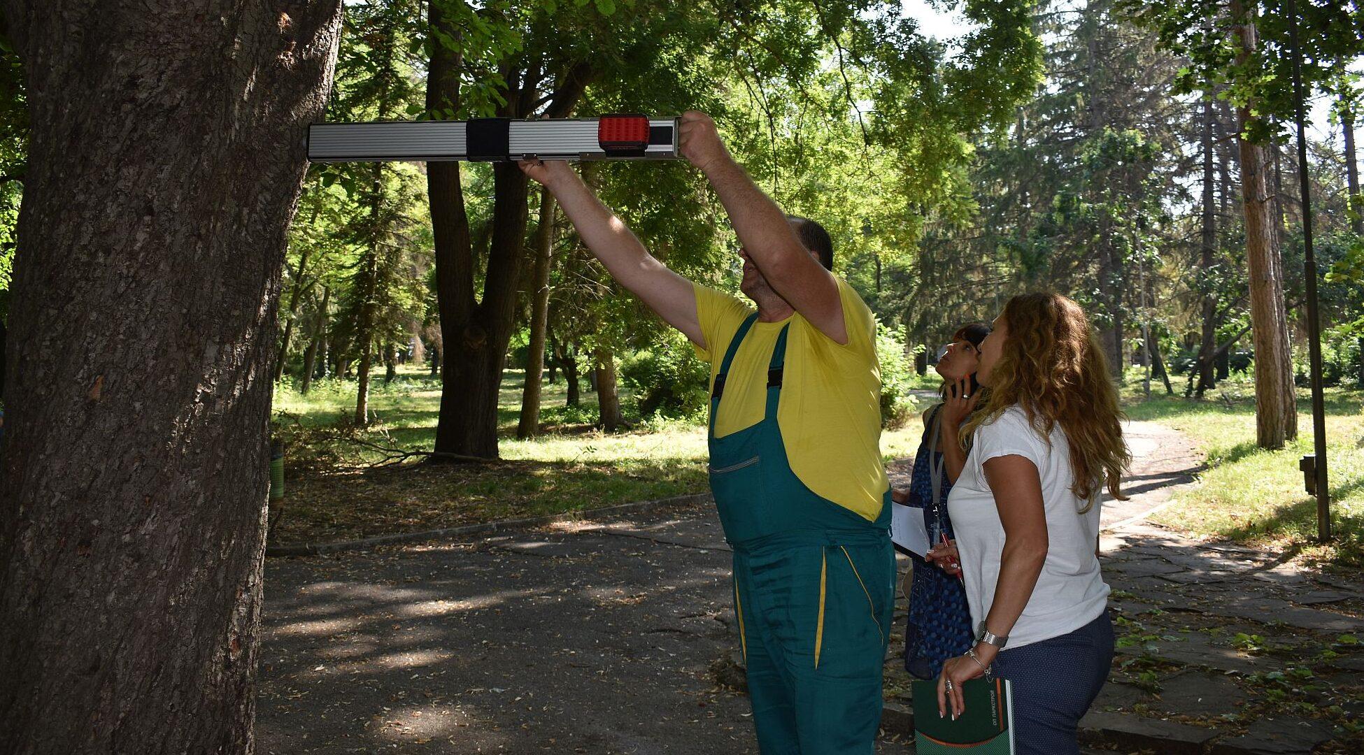 """ОП""""Паркстрой"""" започна обследване на дърветата в парк ..."""